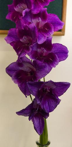 180818-flower-produce-show_0044