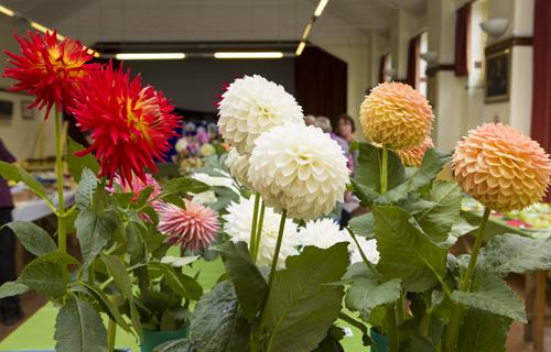 180818-flower-produce-show_0049
