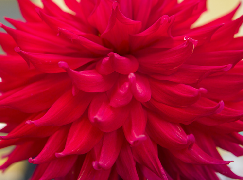180818-flower-produce-show_0062